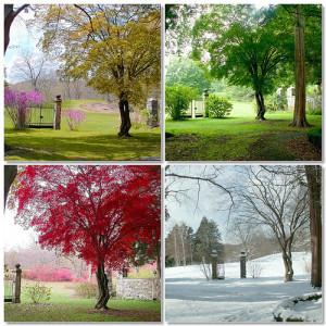 le-quattro-stagioni